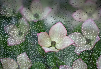 Raindrops On Glass With A View Of Pink Print by Debra Brash