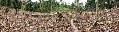 Slash Photograph - Rainforest Cleared To Plant Crop by Dr Morley Read