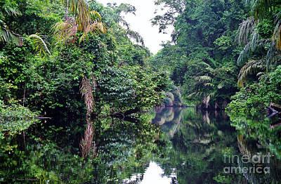 Photograph - Rainforest Magic by Li Newton