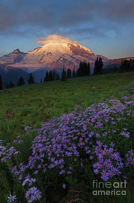 Aster Photograph - Rainier Morning Cap by Mike  Dawson