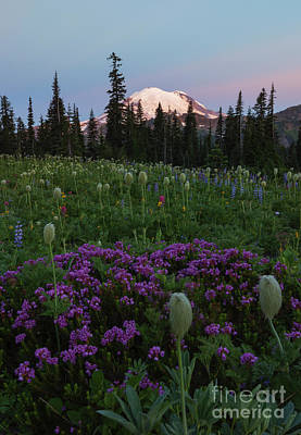 Heather Photograph - Rainier Pastel Dawn by Mike  Dawson