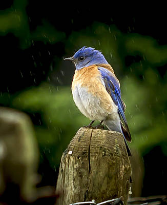 Raining Print by Jean Noren