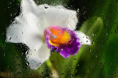 Rainy Day Orchid - Botanical Art By Sharon Cummings Print by Sharon Cummings