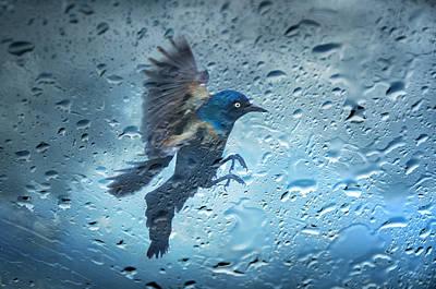 Rainy Day Photograph - Rainy Day by Steven  Michael