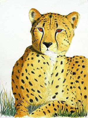 Cheetah Drawing - Rajah by Joette Snyder
