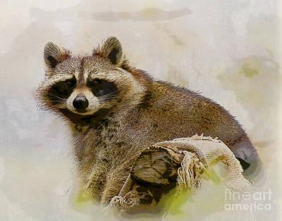 Watercolor Photograph - Rakish Raccoon  by Kerri Farley