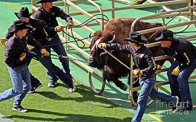 Bison Charge Photograph - Ralphie by Bob Hislop
