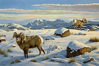 Bighorn Ram Painting - Rams Down From Junction Butte by Paul Krapf