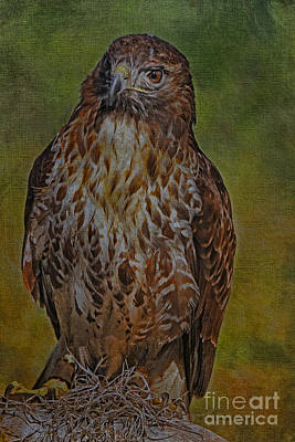 Hawks Mixed Media - Raptor In Apopka by Deborah Benoit
