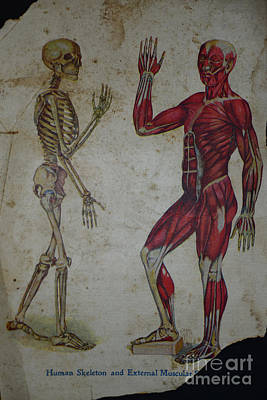 Rare Medical Illustration 1 Of 4 Print by Paul Ward