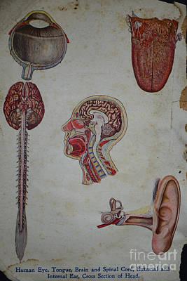 Rare Medical Illustration 2 Of 4 Print by Paul Ward