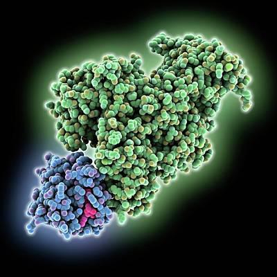 Ra Photograph - Ras Bound To Effector Protein by Laguna Design