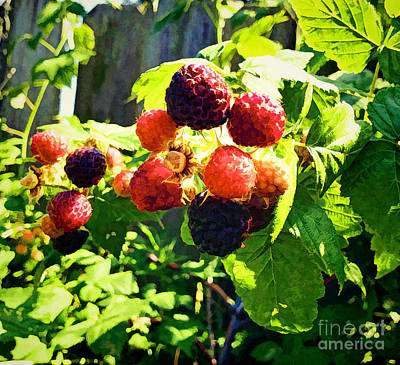 Raspberries A La Fence Print by Luther   Fine Art