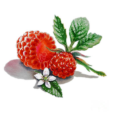 Raspberry Painting - Raspberries  by Irina Sztukowski
