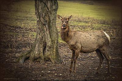 Elk Photograph - Raspberry Elk by LeeAnn McLaneGoetz McLaneGoetzStudioLLCcom