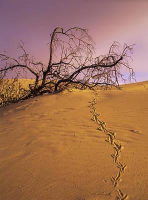 Oregon Dunes National Recreation Area Photograph - Raven Tracks Across The Sand Dune by Robert L. Potts