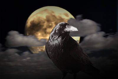 Raven Under The Harvest Moon Print by Randall Nyhof
