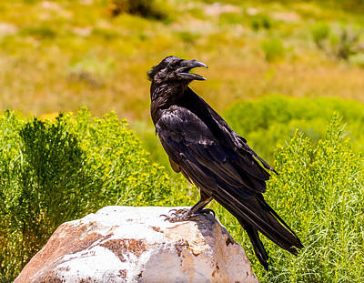 American Crow Photograph - Raven's Rock by TL  Mair