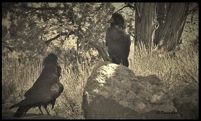 The Void Photograph - Raven's Squawk by Donna Cook
