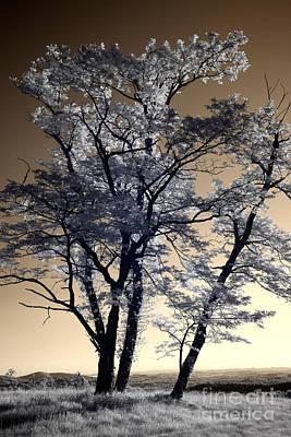 Reach For The Sky I - Blue Ridge Parkway Print by Dan Carmichael
