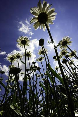 Flower Design Photograph - Reach For The Sky by Rick Berk