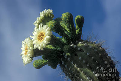 Reaching For The Sky Print by Sandra Bronstein