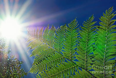 Reaching For The Sun By Kaye Menner  Original by Kaye Menner