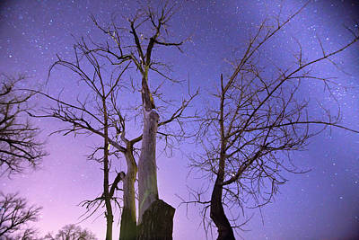 James Insogna Photograph - Reaching To The Stars by James BO  Insogna