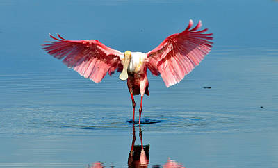 Spoonbill Mixed Media - Ready For Take Off  by Davids Digits