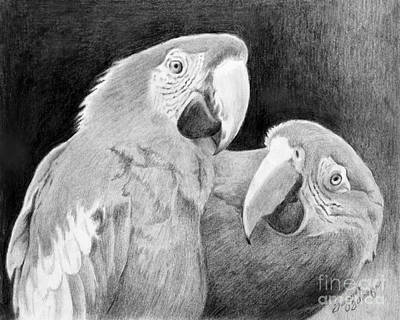 Macaw Drawing - Really Omg by Suzanne Schaefer