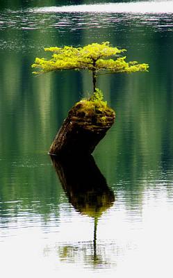 Cypress Stump Photograph - Rebirth  by Marilyn Wilson