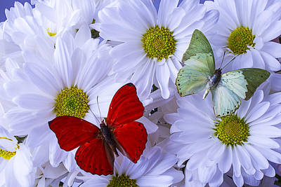 Gardening Photograph - Red And Green Butterflies by Garry Gay