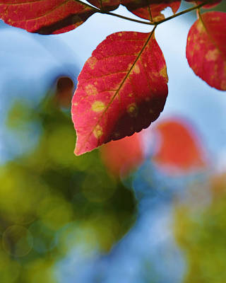 Autumn Photograph - Red And Green Fall Leaves by Brooke Ryan