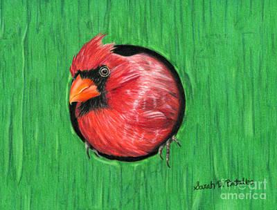 Cardinal Drawing - Red And Green by Sarah Batalka