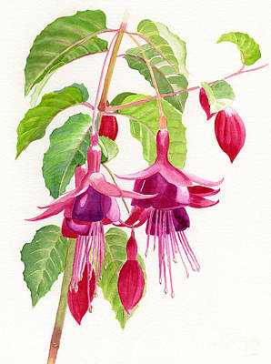 Red And Purple Fuchsias Print by Sharon Freeman