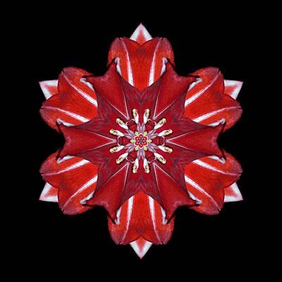 Red And White Amaryllis Vii Flower Mandala Print by David J Bookbinder