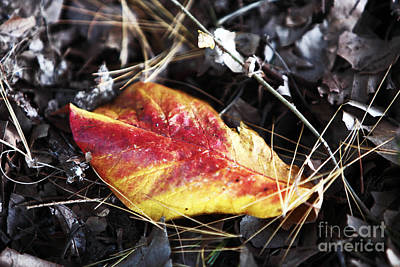 Red And Yellow Print by John Rizzuto