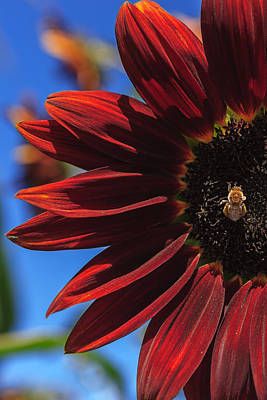 Flowers Photograph - Red Be There by Scott Campbell