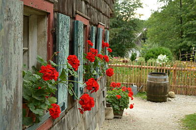 Photograph - Red Beauties by Marty  Cobcroft
