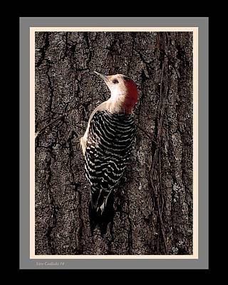 Woodpecker Mixed Media - Red Bellied by Steve Godleski