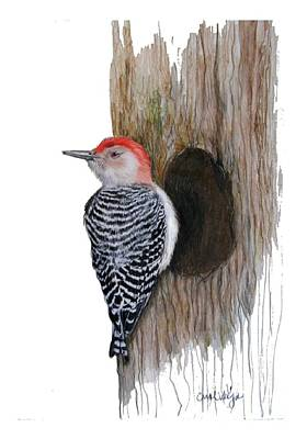 Woodpecker Drawing - Red-bellied Woodpecker  by Carol Veiga