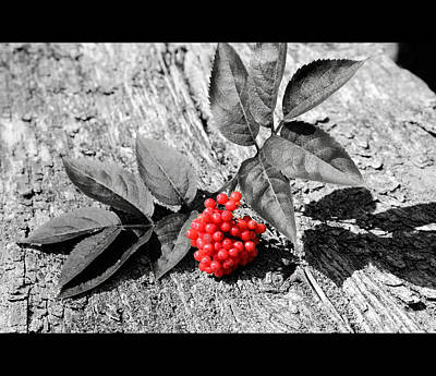Red Berries Original by Toppart Sweden