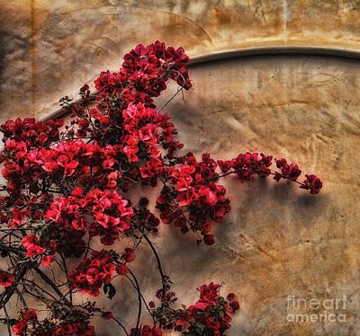 Bougainvilla Photograph - Red Bougainvilla Vine On Stucco Wall by Clare VanderVeen