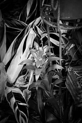 Red Bromeliad And Tricolor Gingers Bw Print by Rich Franco