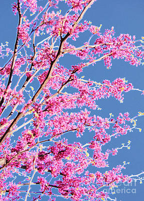Red Bud Spring By Jrr Print by First Star Art