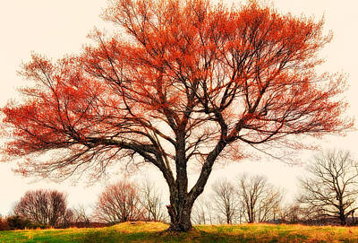 Red Bud Tree - Blue Ridge Parkway I Print by Dan Carmichael
