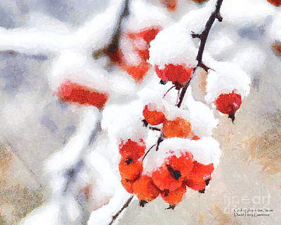 Red Crabapples In The Winter Snow - A Digital Painting By D Perry Lawrence Print by David Perry Lawrence