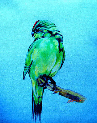 Parakeet Drawing - Red Crowned Parakeet by Patricia Howitt