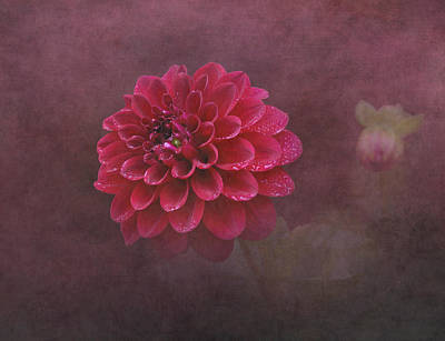 Raindrops On Flowers Photograph - Red Dahlia by Angie Vogel
