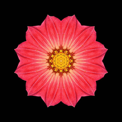 Red Dahlia Hybrid I Flower Mandala Print by David J Bookbinder